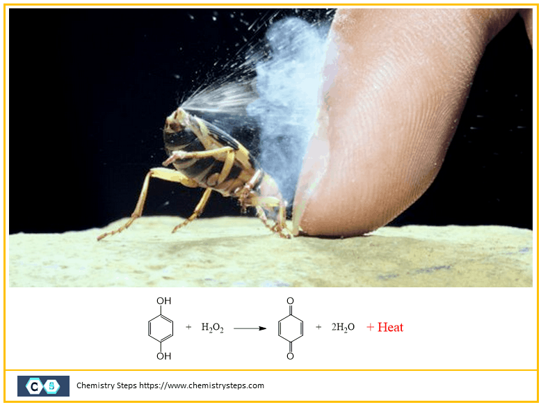 Bombardier beetle uses ...